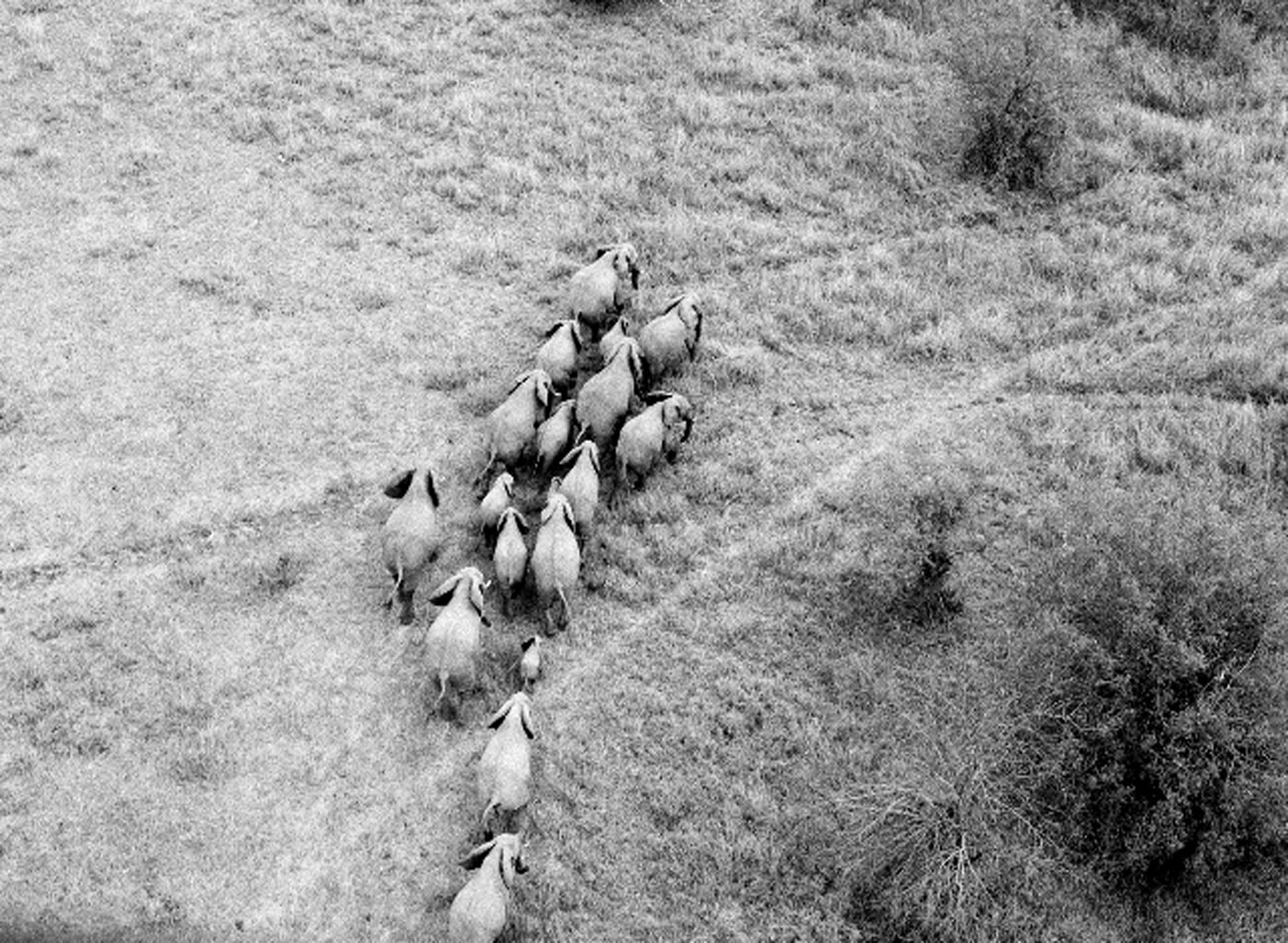 elephants in Tanzania Africa